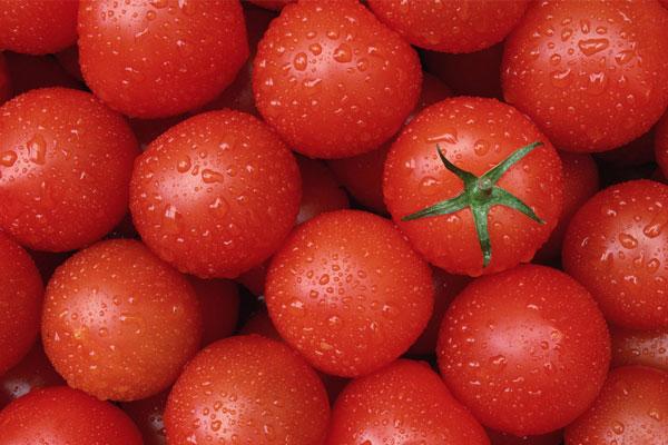 关于番茄你了解多少