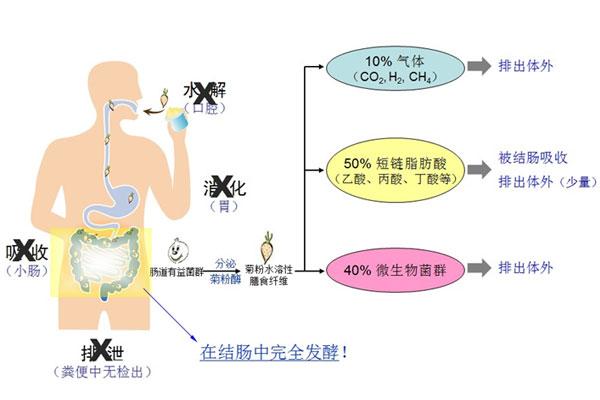 菊粉水溶性膳食纤维对便秘的作用