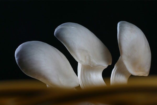 蘑菇的功效