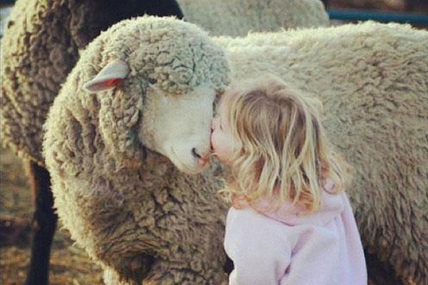 """羊奶被国际营养学界誉为 """"奶中之王"""""""